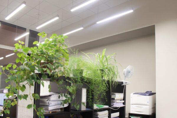 Офисный светодиодный светильник Линейный на тросах Wp elegant-60-1500